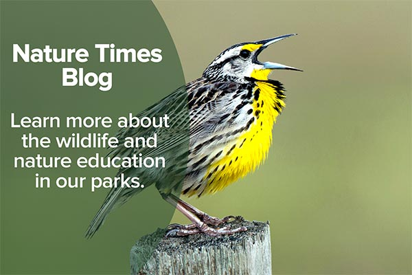 Nature Times Blog